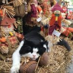 Toby Loves the Fall Festival and Pumpkin Playground