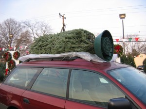 Bringing Your Christmas Tree Home