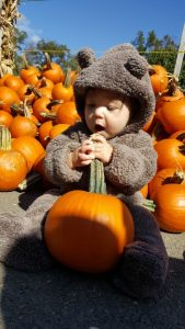 2016 Runner-Up: The Pumpkins at Burke Nursery are Beary Delicious!