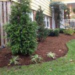 Trees & Shrubs for Landscaping in Burke VA
