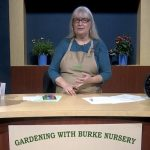 Gardening with Burke Nursery in Burke VA